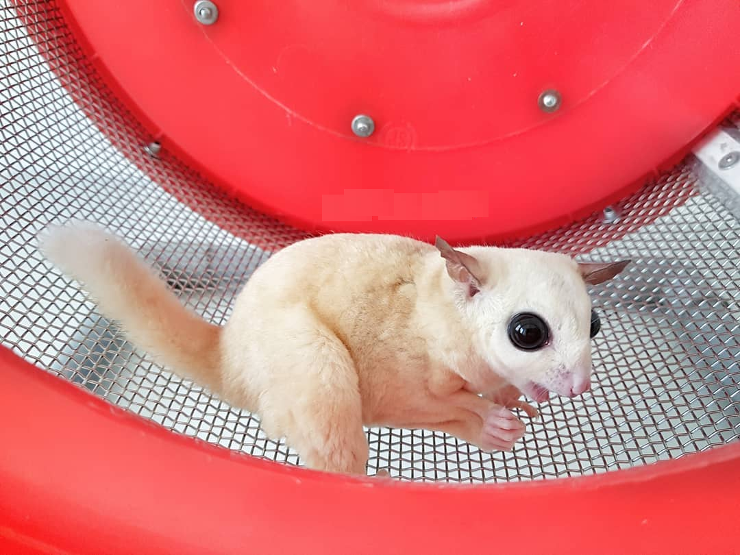 Wheel for Sugar Glider